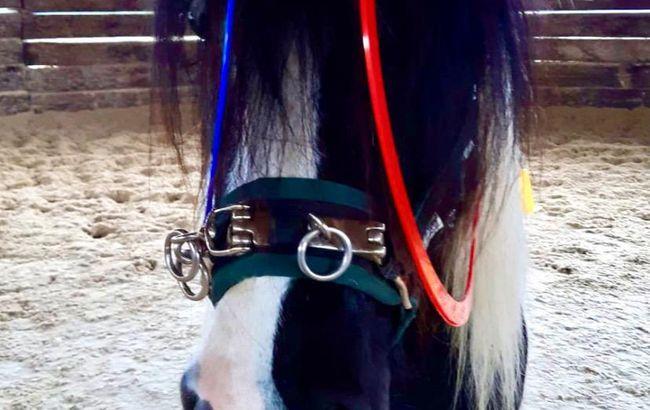 Reitanlage und Einstellbetrieb von Pferden