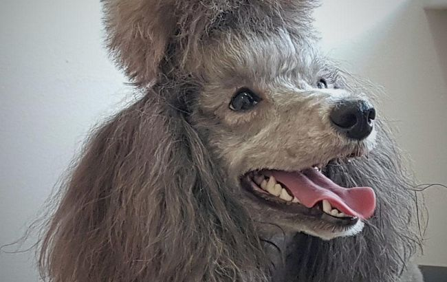 Hundesalon SCHICK&GSUND